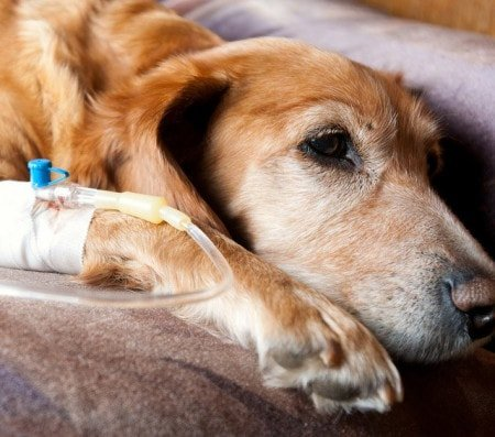 Veterinary Infusion Sets and Accessories
