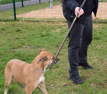 Animal Restraining Equipment