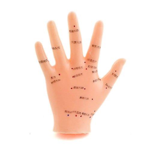 Modèle d'acupuncture de la main