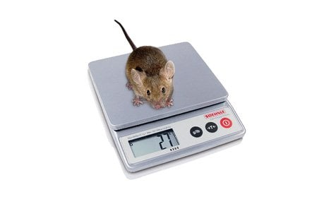 Lab Scales - Lab Supplies