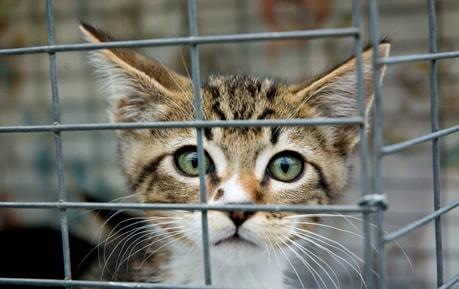 Transportboxen für Katzen