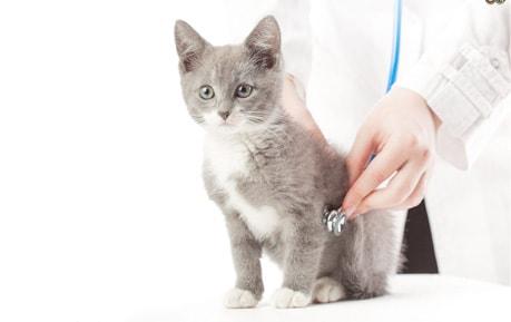 Veterinär-Stethoskope