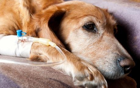 Infusionszubehör für Tierärzte