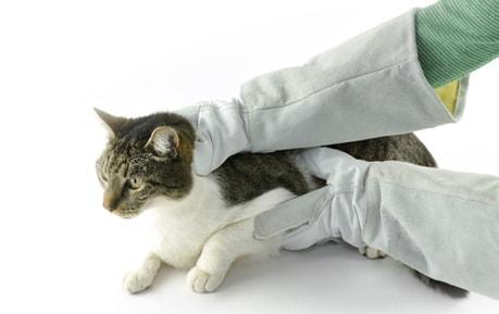 Schutzhandschuhe für Tierärzte