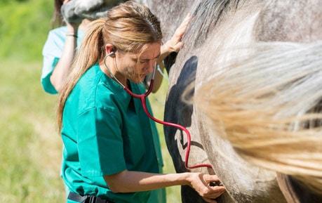 Stethoskope für Tierärzte