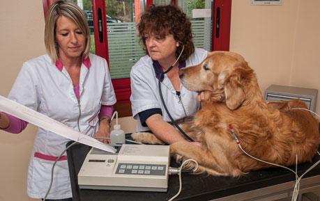 EKG-Geräte für Tiere