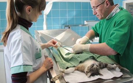 OP-Bedarf für Tierärzte