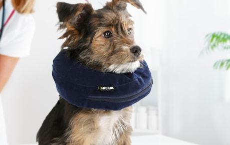 Hunde-Halskrausen