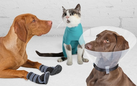 Wound Protection in Large and Small Animals
