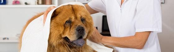 Zubehör für den Hundefriseur