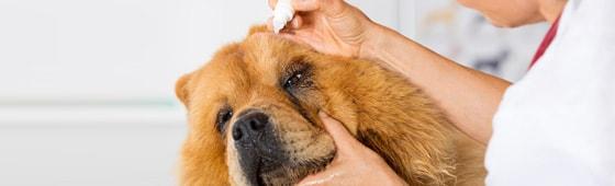 Salben & Lösungen für Tierärzte