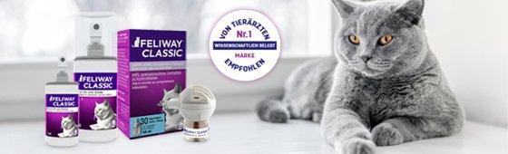 Reducción de estrés en gatos