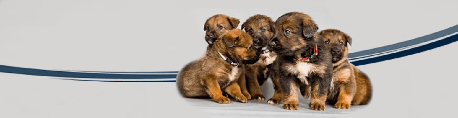 Geburtshilfe für Tiere