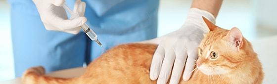 Einwegkanülen für die Tiermedizin