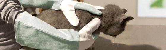 Tier-Schutzhandschuhe
