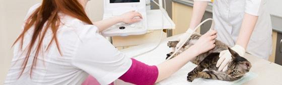 Ultraschall beim Tier