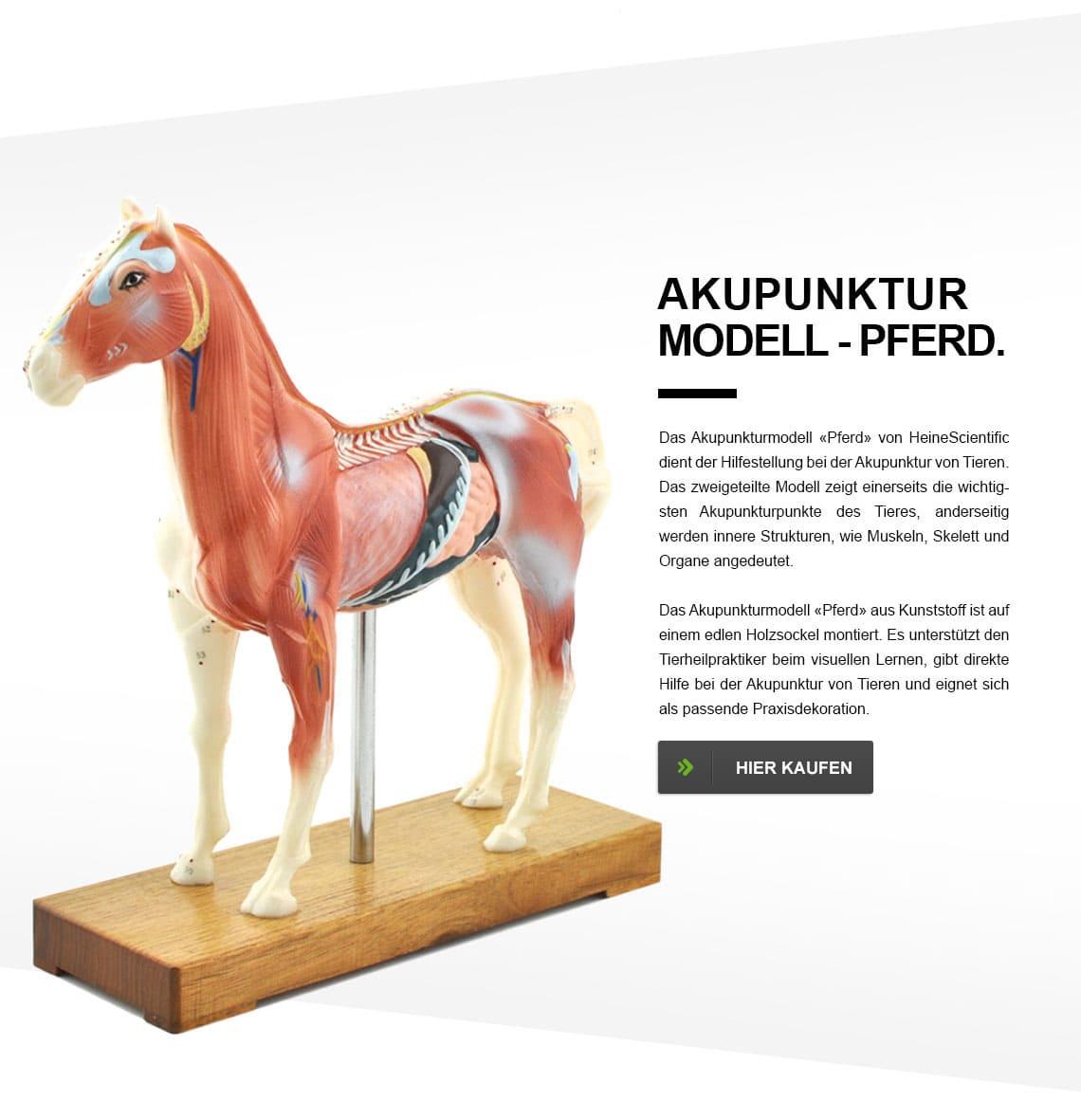 Atemberaubend Sichtbar Pferd Anatomie Modell Fotos - Menschliche ...