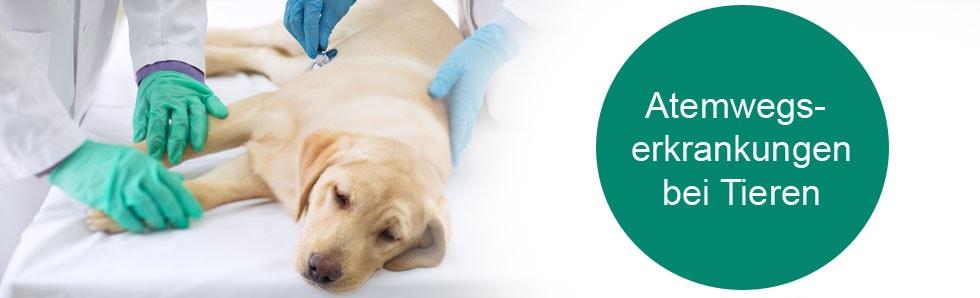 Atemwegserkrankungen bei Tieren