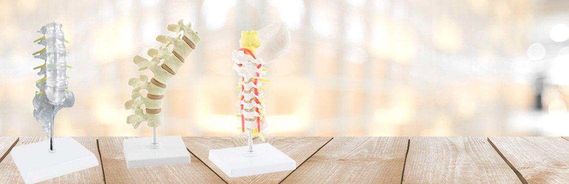 Modèles de colonne vertébrale