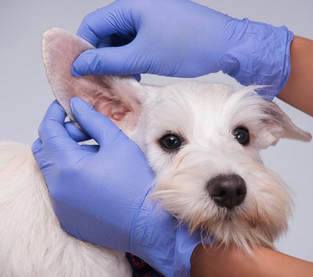 Handschuhe für den Tierarzt