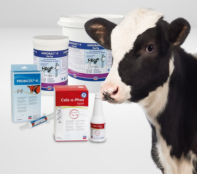 Nutritional Supplements for Calves and Cows