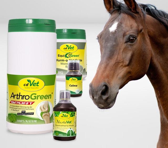 Nahrungsergänzung für Pferde