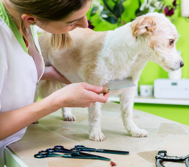 Animal Treatment and Care