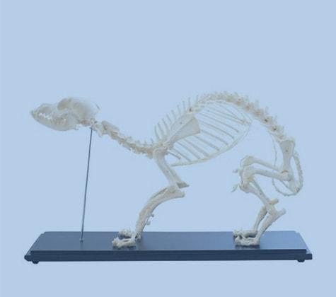 Modèles anatomiques