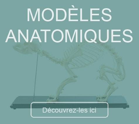 Modèles anatomiques HeineScientific