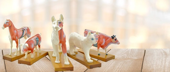 Animal Acupuncture Models