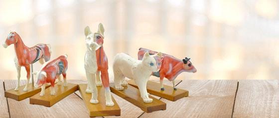 Akupunktur-Modelle für Tierärzte