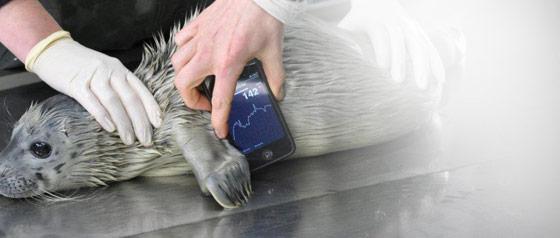 Veterinär-EKG-Monitor