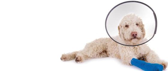 Hunde-Halskragen