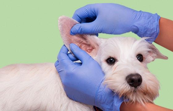 Handschuhe für Tierärzte