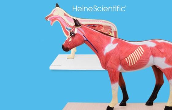 Modela anatomiczne zwierząt