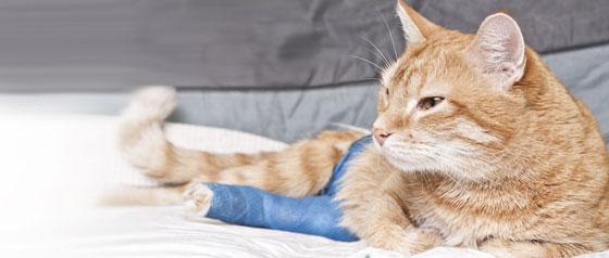 Cast Bandages