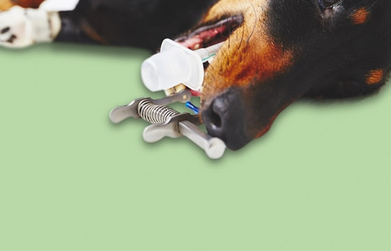 EHBO-uitrusting voor dierenartsen