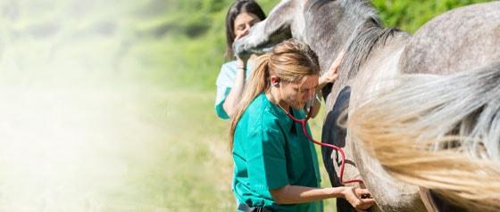 Stethoscopes for Veterinarians