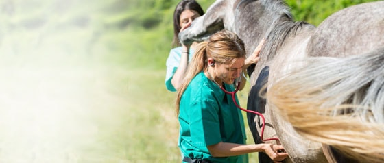 Stéthoscopes vétérinaires