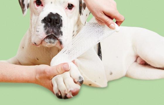 Verbandmittel für Tiere