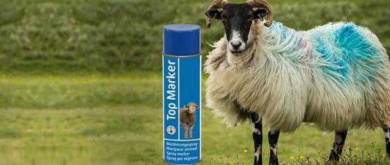Spray marqueur pour les moutons