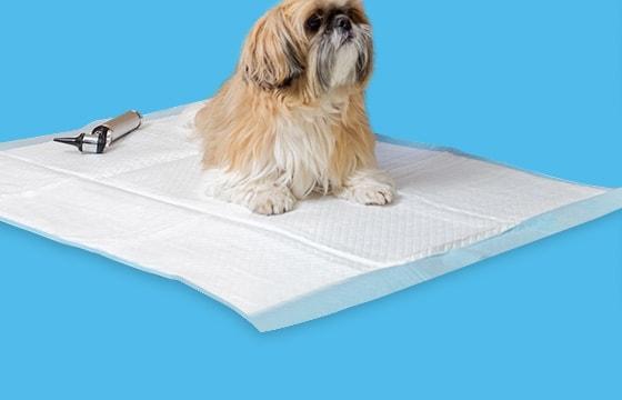 Papierprodukte für die Tierarztpraxis
