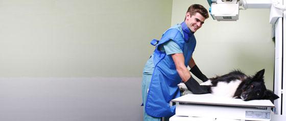 Röntgenschürzen
