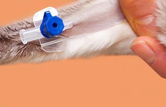 Venenkatheter für Tiere