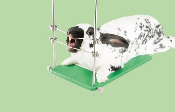 Fixatiestandaard voor knaagdieren