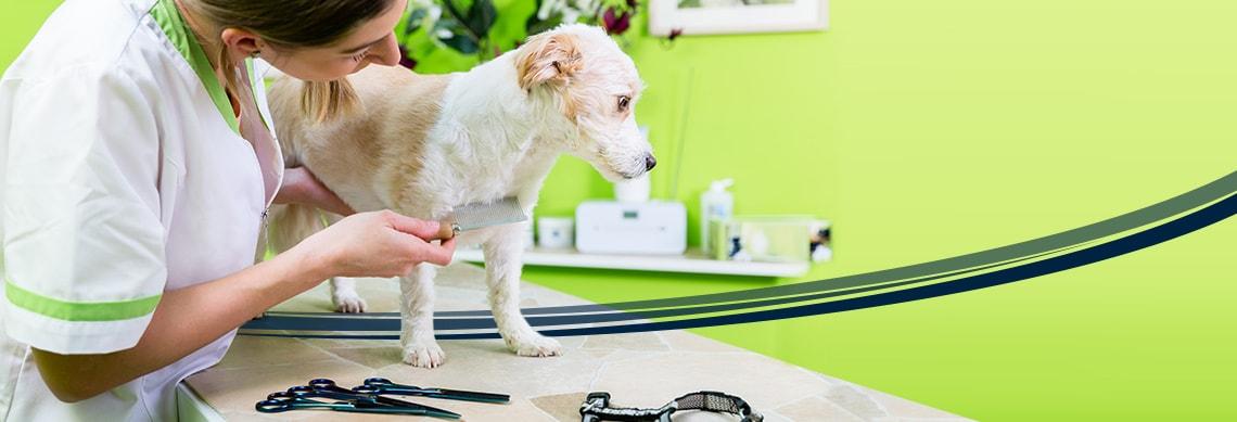 Animal Treatment & Care