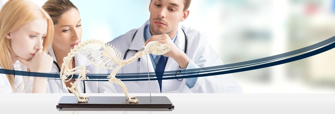 Echtmodelle von HeineScientific®