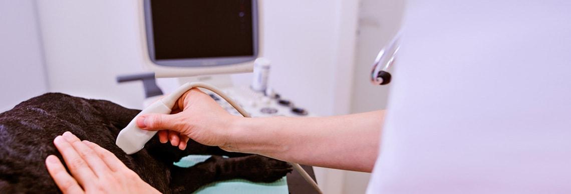 Ultraschallgeräte Veterinär