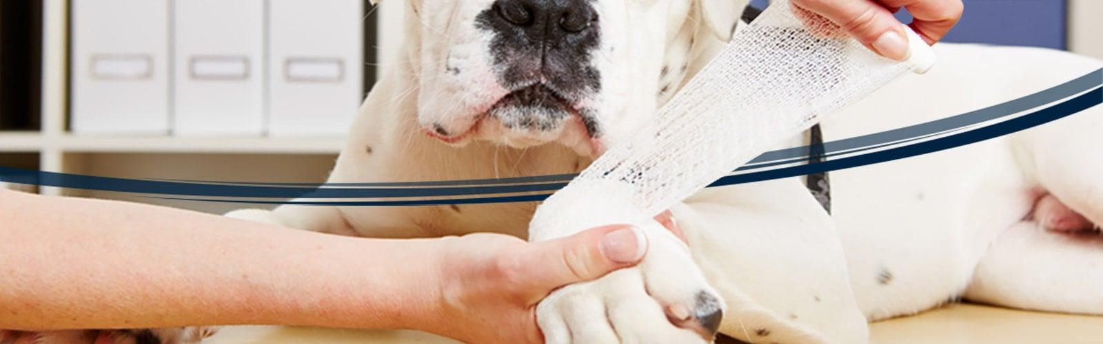 Pansements vétérinaires