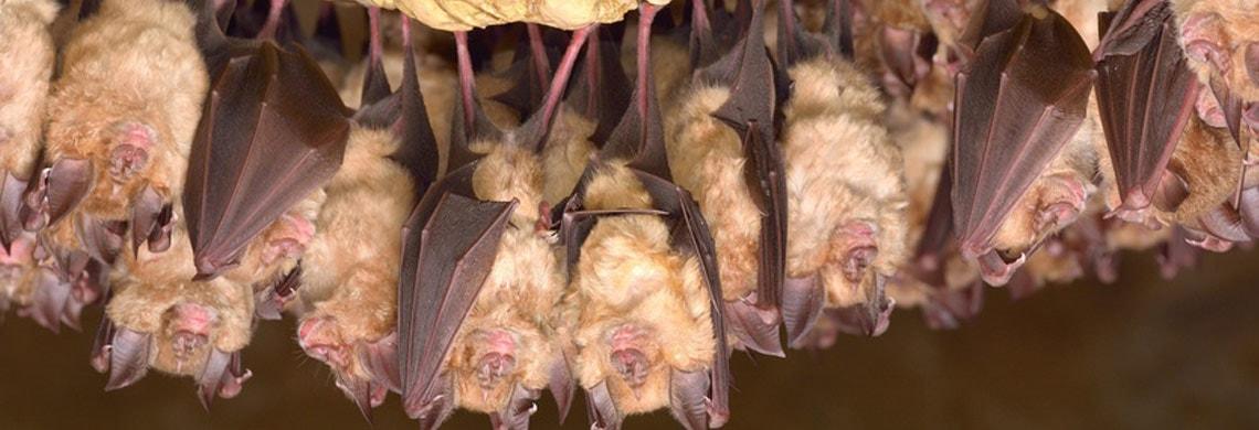 Fledermäuse und Tierärzte